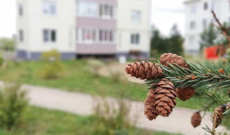 ЖК Морозовка Семейное дерево